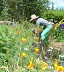 Garden Digging_3 copy